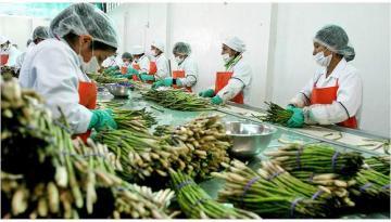 Agroindustria es la actividad más dinámica en generación de puestos de trabajo relacionados a la exportación