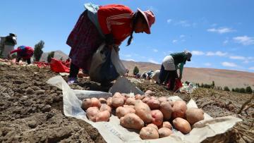 Perú y Bolivia unen esfuerzos para que pequeños agricultores tengan mejores ingresos con las ventas de papas