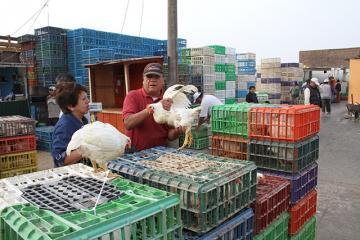 Producción de pollo se incrementó 3.5% este año