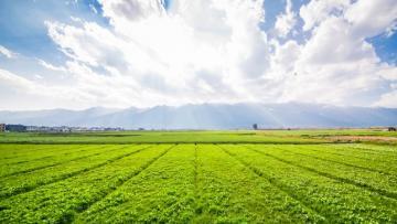 Superficie agrícola de Perú asciende a 11.649.716 hectáreas