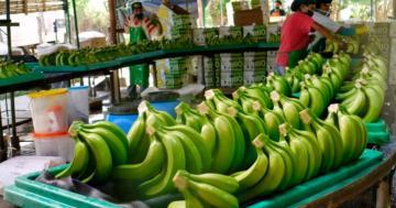 Toque de queda a partir de las 4 de la tarde en Piura afecta exportaciones de banano orgánico