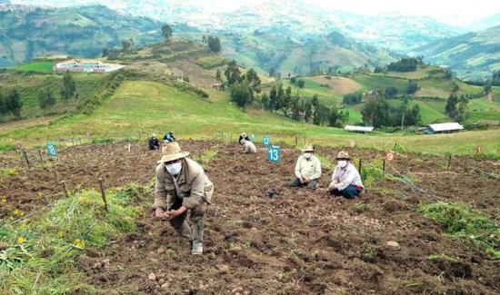 FAE Agrícola tendrá un presupuesto de S/ 500 millones