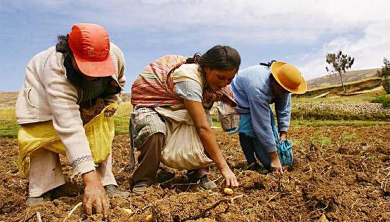 1.394 agricultores se acogieron a 'deuda cero' de Agrobanco para facilidades de pagos de sus créditos