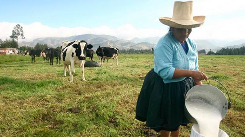 1.8 millones de familias ganaderas son excluidas del FAE Agrario