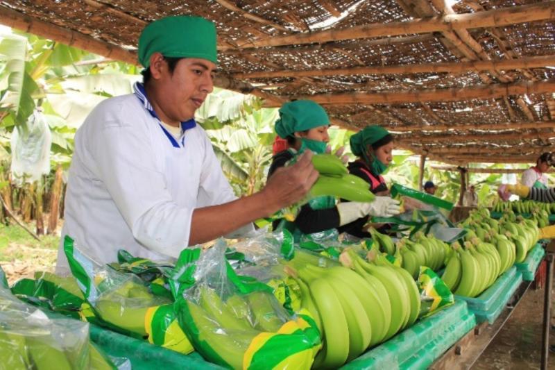Actividad agraria de exportación es la principal generadora de empleo en el país