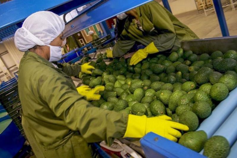 ADEX: Exportaciones crecerían 15% este año impulsadas por minería y agroindustria