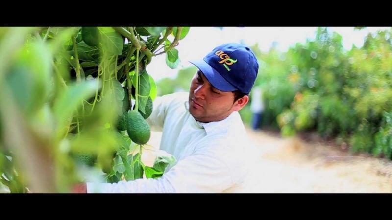 Agrícola Cerro Prieto adquirió acciones de empresa en Colombia