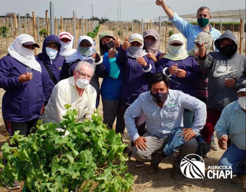 Agrícola Chapi completó la plantación de 150 hectáreas de uvas en su Fundo Don Ernesto