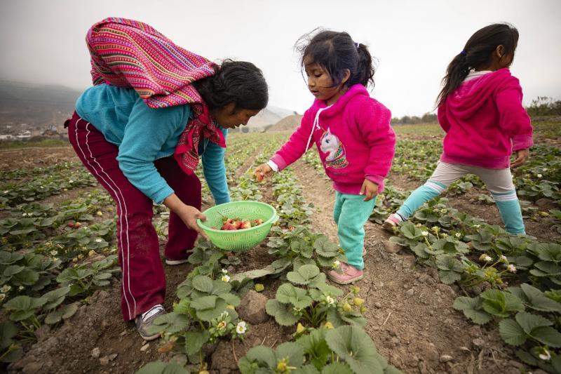 Agricultoras reinventan sus negocios para generar ingresos durante la pandemia