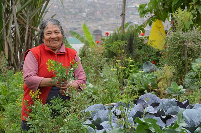 Agricultores de Lima ofrecerán productos frescos y libres de químicos en expoferia