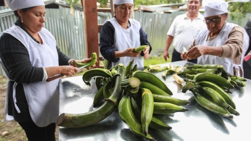 Agricultores de San Martín mejoran productividad y comercialización de harina de plátano