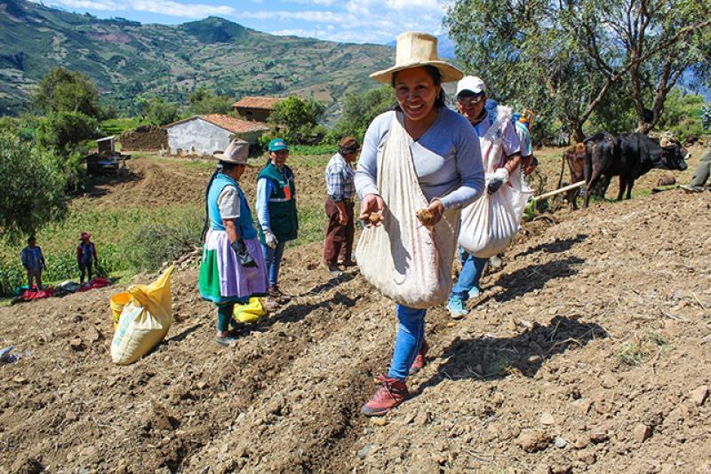 Agricultura familiar de zonas altoandinas mejorarán el manejo de cultivo de papa