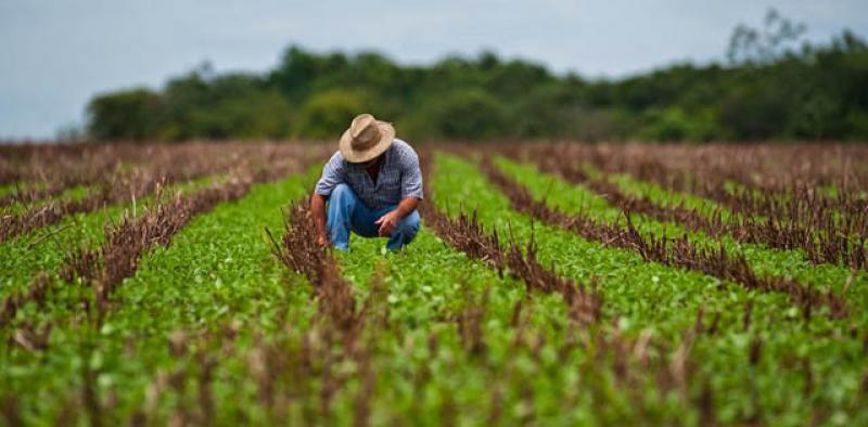 """""""Agricultura familiar debe modernizarse para ser productiva y sostenible"""""""