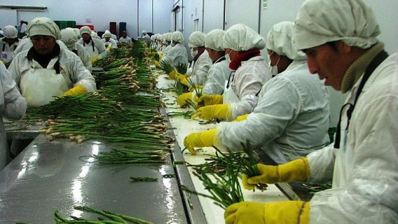 Agricultura moderna se desarrolla en 202.476 hectáreas de 16 regiones