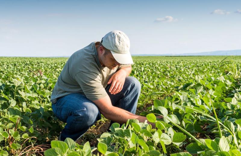 Agricultura orgánica: facilitar canales de comercialización es clave para apuntalar a los pequeños productores