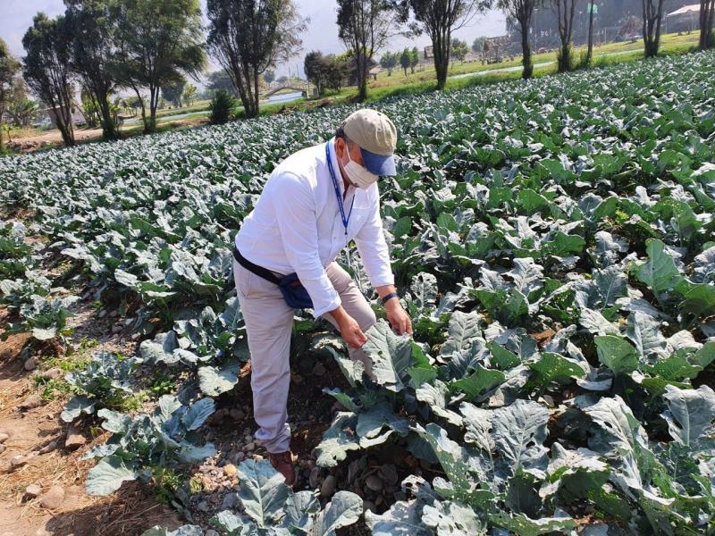 Agriland Global apuesta por el Valle de Chillón en Lima