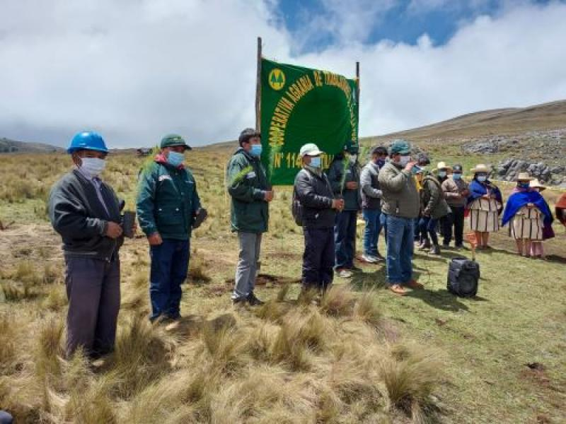 Agro Rural instala más de 22.000 plantones forestales maderables en Cajamarca