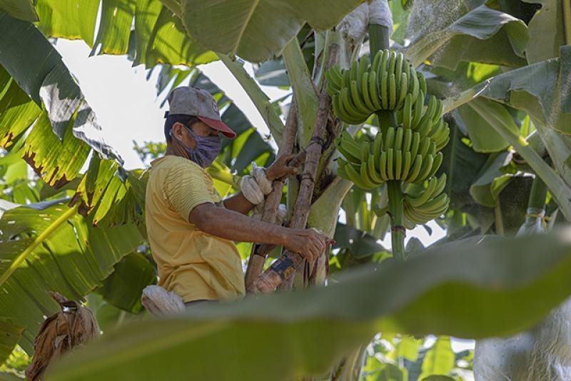 Agrobanco: 83 mil pequeños productores agropecuarios serán beneficiados con créditos a tasas más bajas gracias al FIFPPA