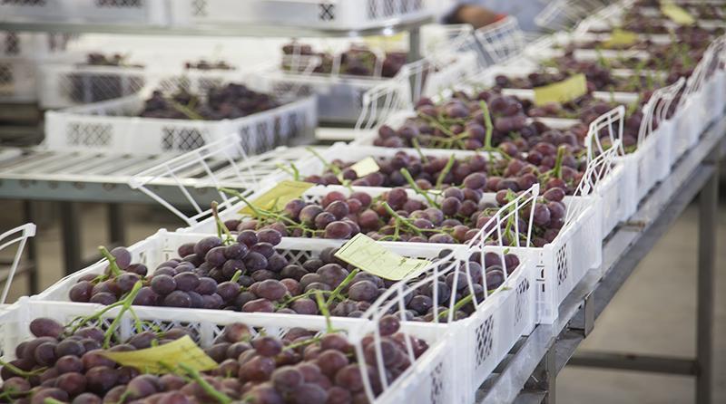 Agroexportaciones no tradicionales de Perú a Costa Rica sumaron US$ 7.5 millones en la primera mitad del 2021