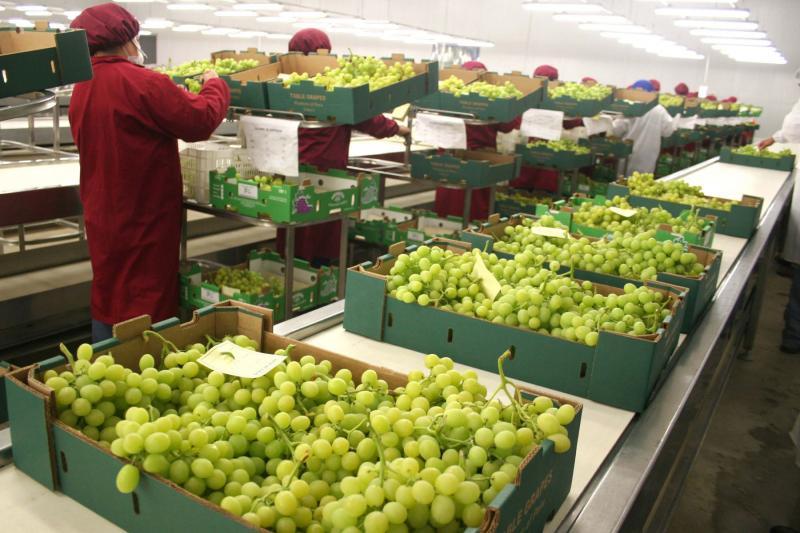 Agroexportaciones peruanas crecen 12.8% en valor en el primer bimestre del año