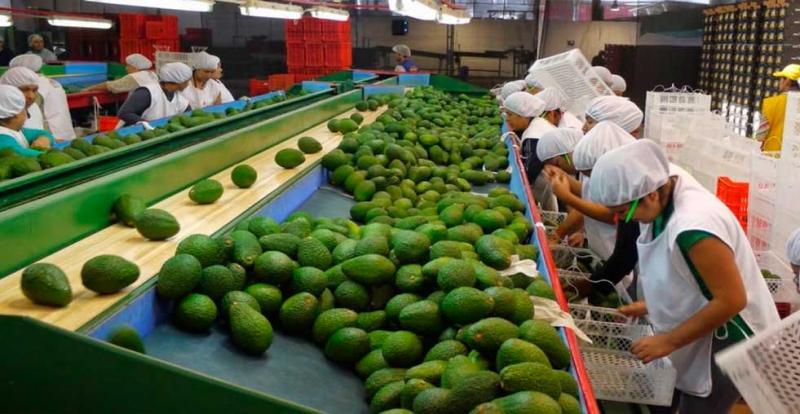 Agroexportaciones peruanas crecen 16.2% en el primer trimestre del año