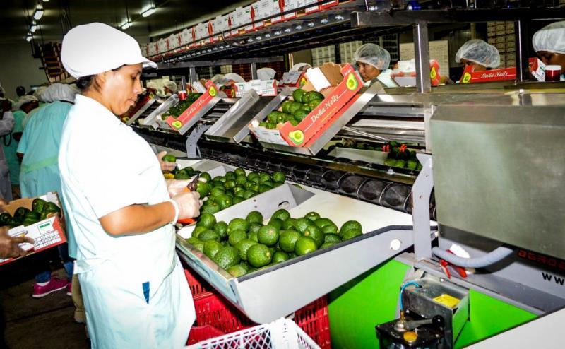 Agroexportaciones peruanas crecieron 9% entre enero y septiembre de este año