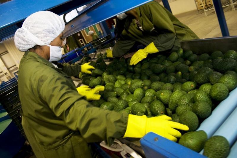 Agroexportaciones representan el 14.12% del total de las exportaciones de enero a agosto de este año