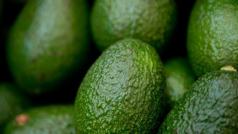 Agroexportadora Green Perú es la primera en obtener la certificación de Exportador Autorizado