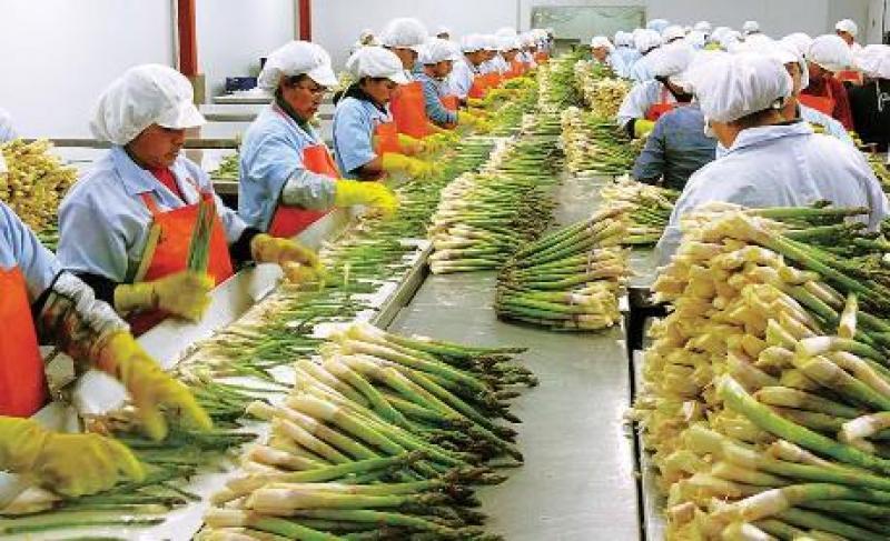 Agroindustria fue el principal creador de empleo en el 2019