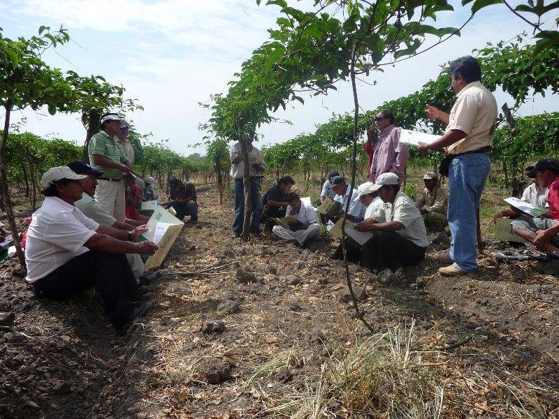 AGRORURAL LANZARÁ MICROSEGURO DE VIDA
