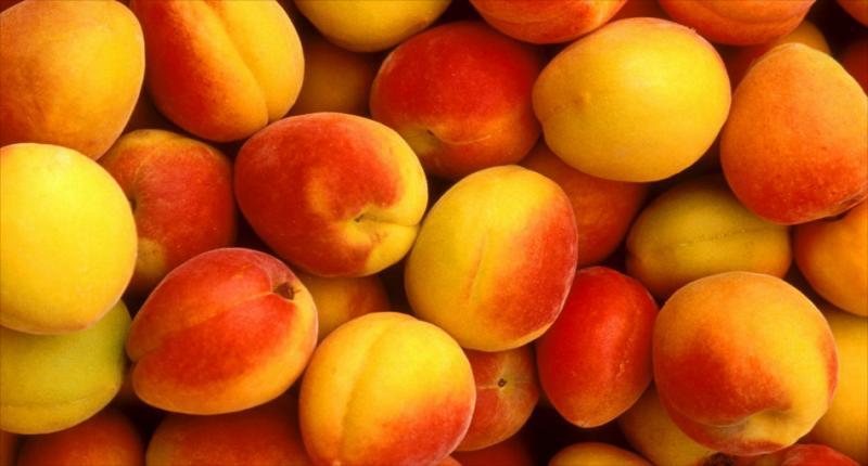 AJE Procesos quiere cubrir 700 hectáreas agrícolas con durazno
