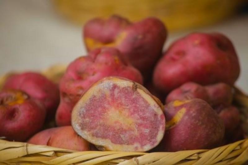 Áncash: conoce el exitoso plan que potenció la producción de papa nativa en Huayllabamba