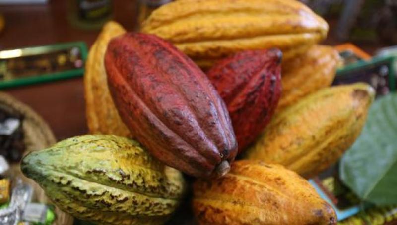 APPCacao: Indonesia aumenta demanda por cacao peruano