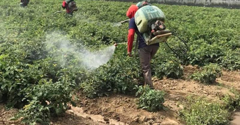 Aprueban el procedimiento para la importación directa de plaguicidas de uso agrícola