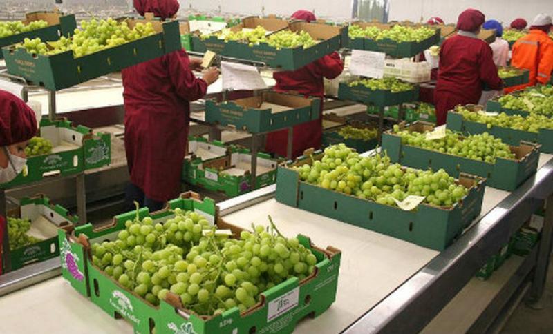 Argentina abrió sus puertas para la uva de mesa peruana