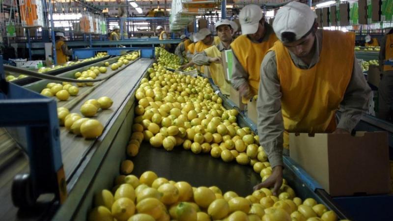Argentina exportará limones a China por primera vez