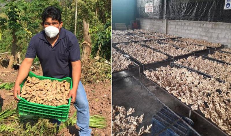 Ayacucho: ingeniero agroindustrial logra exportar kion al mercado europeo