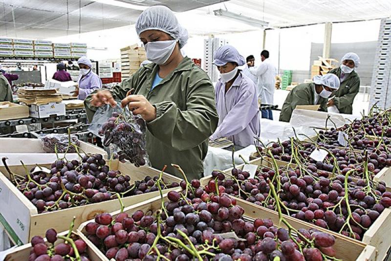 BCR: Este año sector agropecuario crecería 2.7% impulsado por las exportaciones
