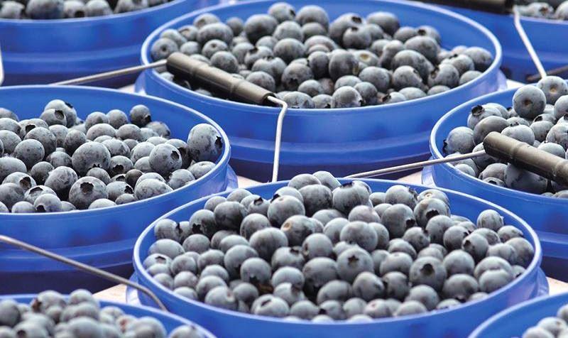 Berry People firma alianza con productores peruanos