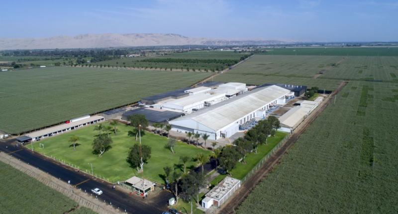 Beta abre planta de congelado: espera abarcar el 65% de la producción de espárrago