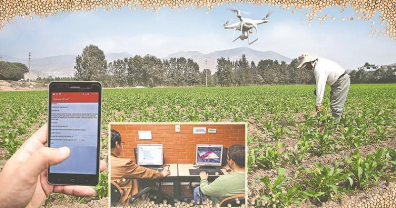 Buscan desarrollar sistema de monitoreo basado en el uso de TIC para mejorar cadena de quinua