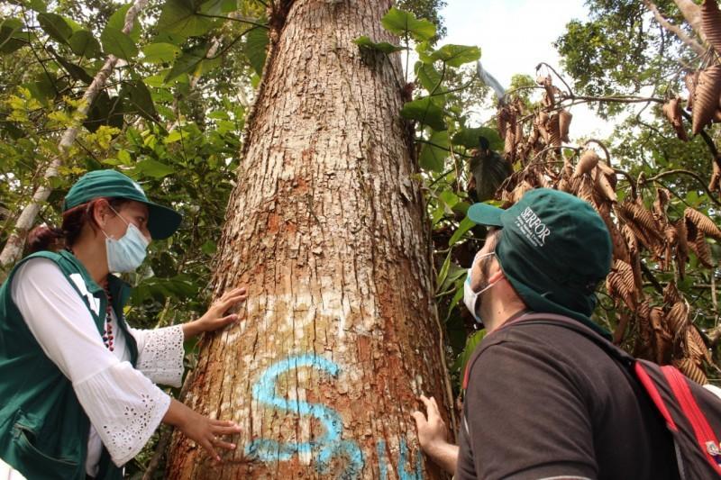 Cajamarca: fortalecen aprovechamiento sostenible de madera en comunidad nativa Naranjos