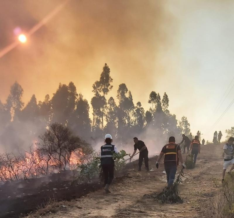 Cajamarca: incendios forestales arrasan 700 hectáreas de plantaciones