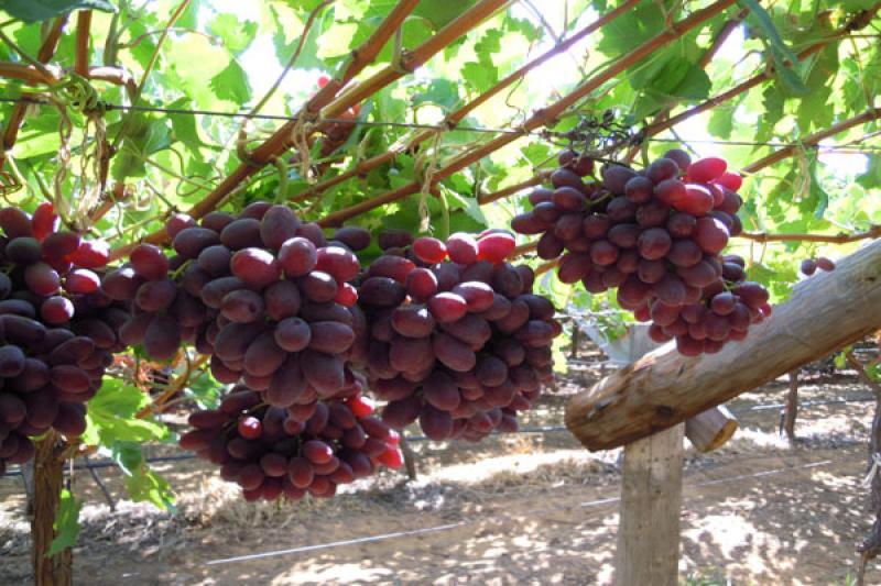 Cambio climático podría reducir un tercio los rendimientos de las frutas y hortalizas