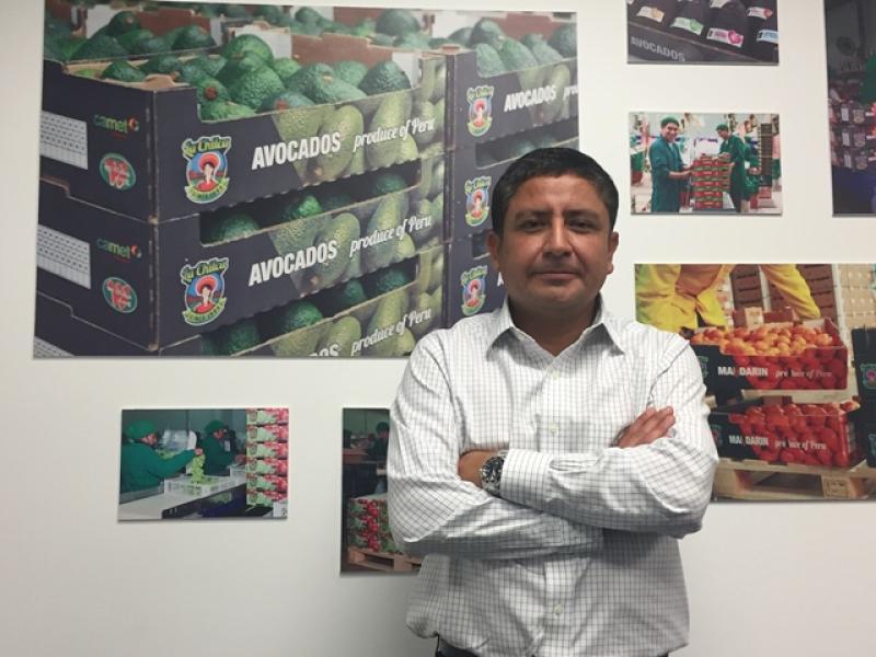 Camet Trading busca crear marca para su palta producida en la sierra