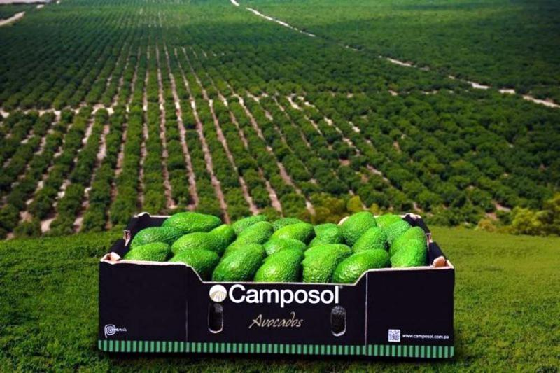 Camposol priorizará packing de palta