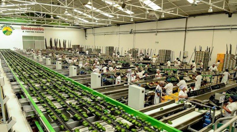 Camposol se mantiene como la principal empresa agroexportadora peruana en el 2019