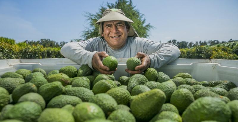 Camposol sembrará paltas y arándanos en México