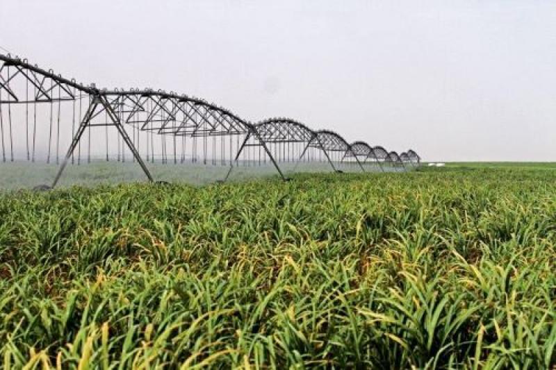 Caña de azúcar, palto y arándanos son los principales cultivos en proyecto Olmos