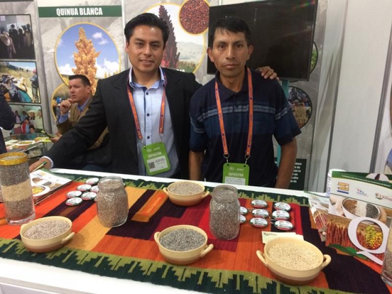 Cedepas Norte ayuda a exportar 100 toneladas de quinua y 4 toneladas de mango a pequeños productores orgánicos